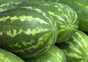 watermelon fucker